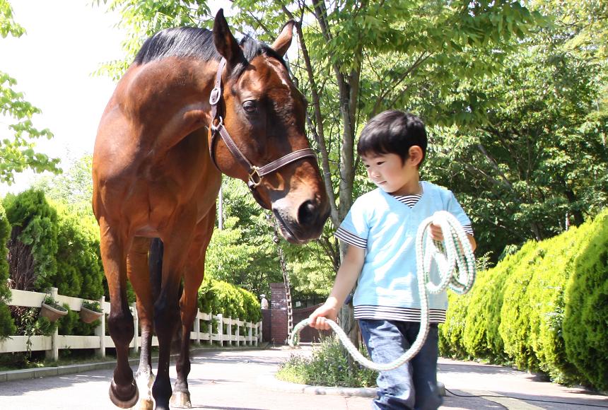 ポニーひき馬のご案内